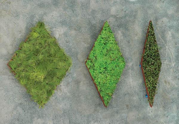 Planos de jardines - Diseños de jardines - Jardines modernos (5)