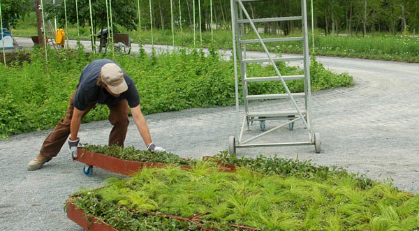 Planos de jardines - Diseños de jardines - Jardines modernos (2)
