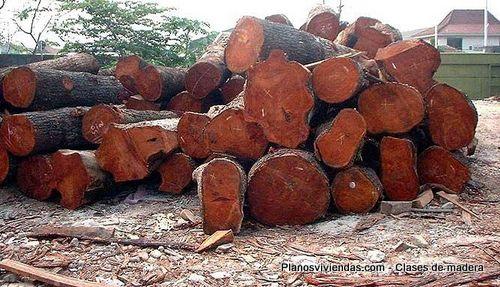 Clases de árboles maderables talados para construcción de interiores y de exteriores
