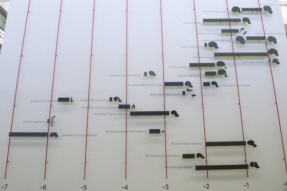 Museo de la Evolución Humana en Burgos España (12)