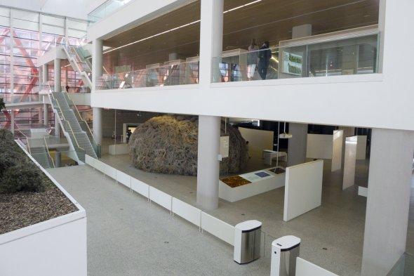 Museo de la Evolución Humana en Burgos España (14)