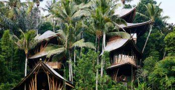 Retiro del bosque indonesio revela techos en forma de hoja, piscina de grutas y otros elementos modernos