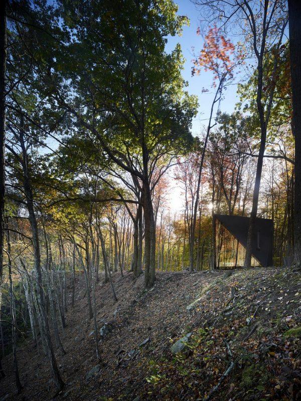 En medio del bosque
